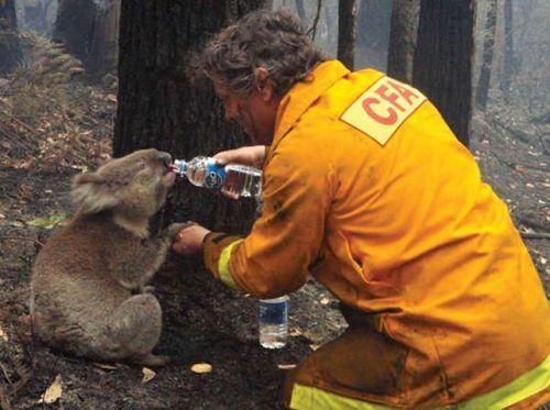 Fireman and Koala